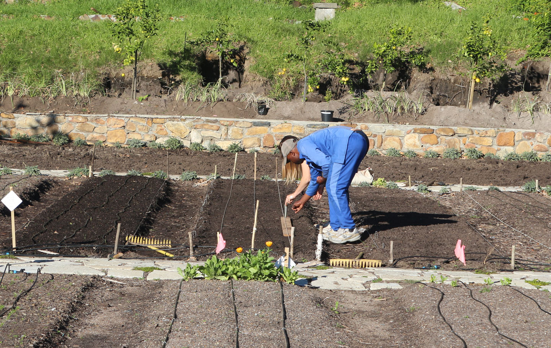 66 Square Feet Plus Oranjezicht City Farm