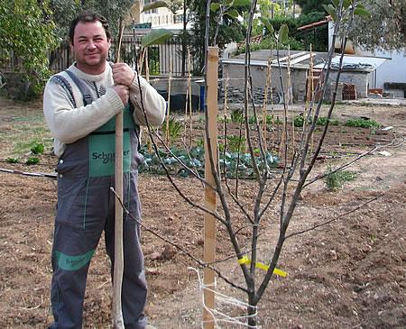 μετά τη φύτεψη ενός δέντρου