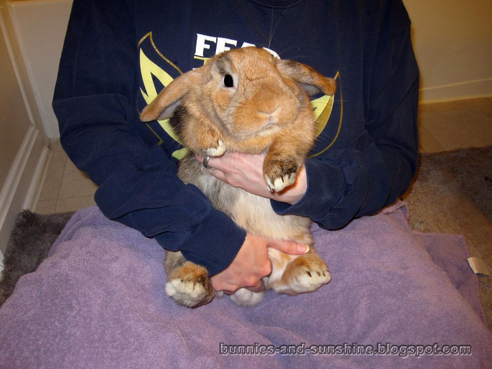 Bunnies and Sunshine: Bunny mani-pedi time!