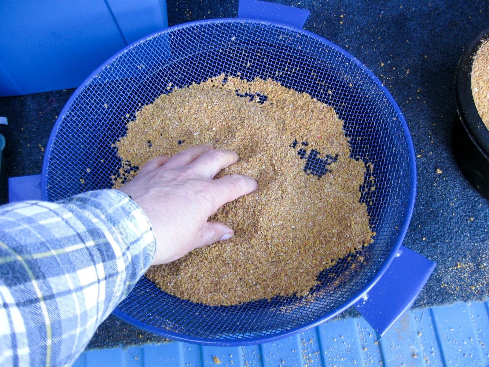 How to drown maggots the great groundbait lesson for Can fish drown