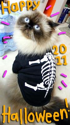 cat-skull-02