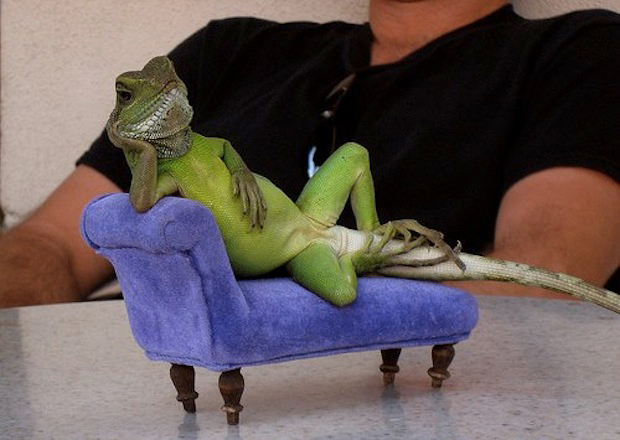 30 pictures of animals sitting like humans, animals sitting like people