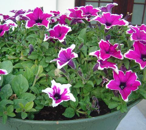 Vida a lo verde living in green galer a de fotos con for 6 plantas ornamentales