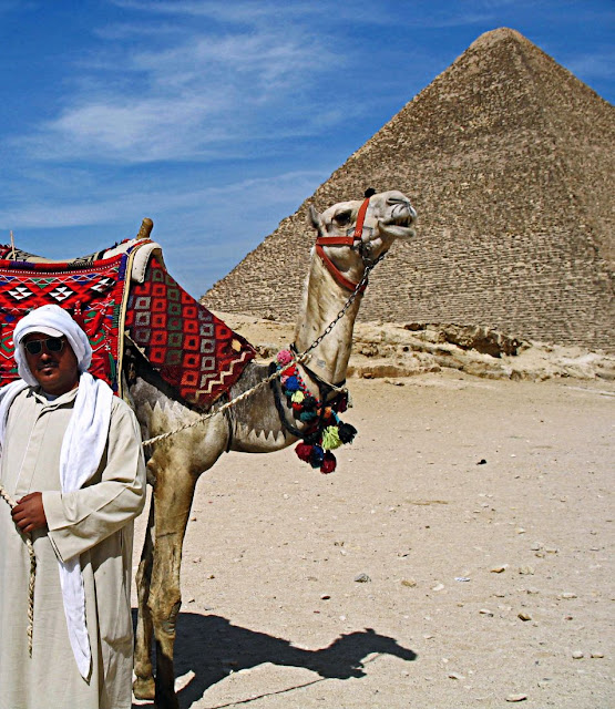 camel against a background of a pyramid