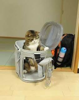 pisic maru amuzant poze de vedeta