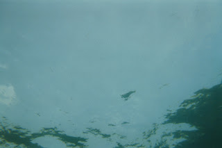 Richard Müller: Photographies sous l'eau 4