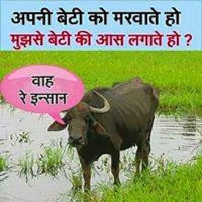 Bhaiswa