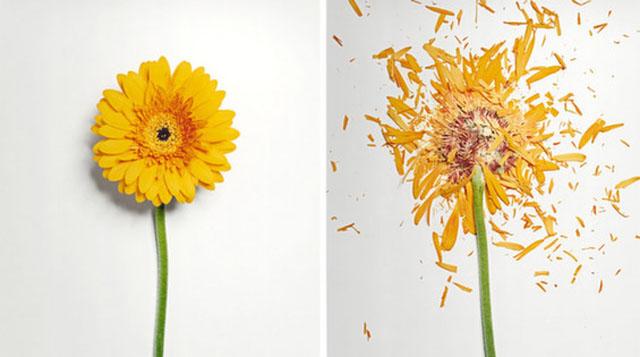 La destrucción de las flores con nitrógeno líquido los hace aún más hermosas