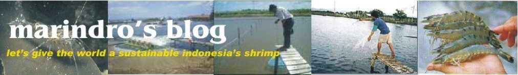 shrimp culture information