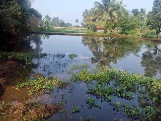 kolam budidaya