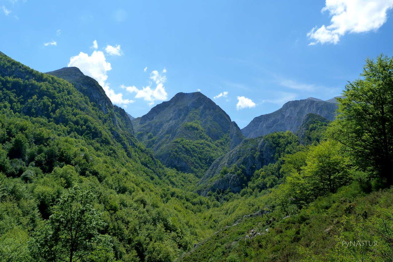 Bosque de Lindes Asturias