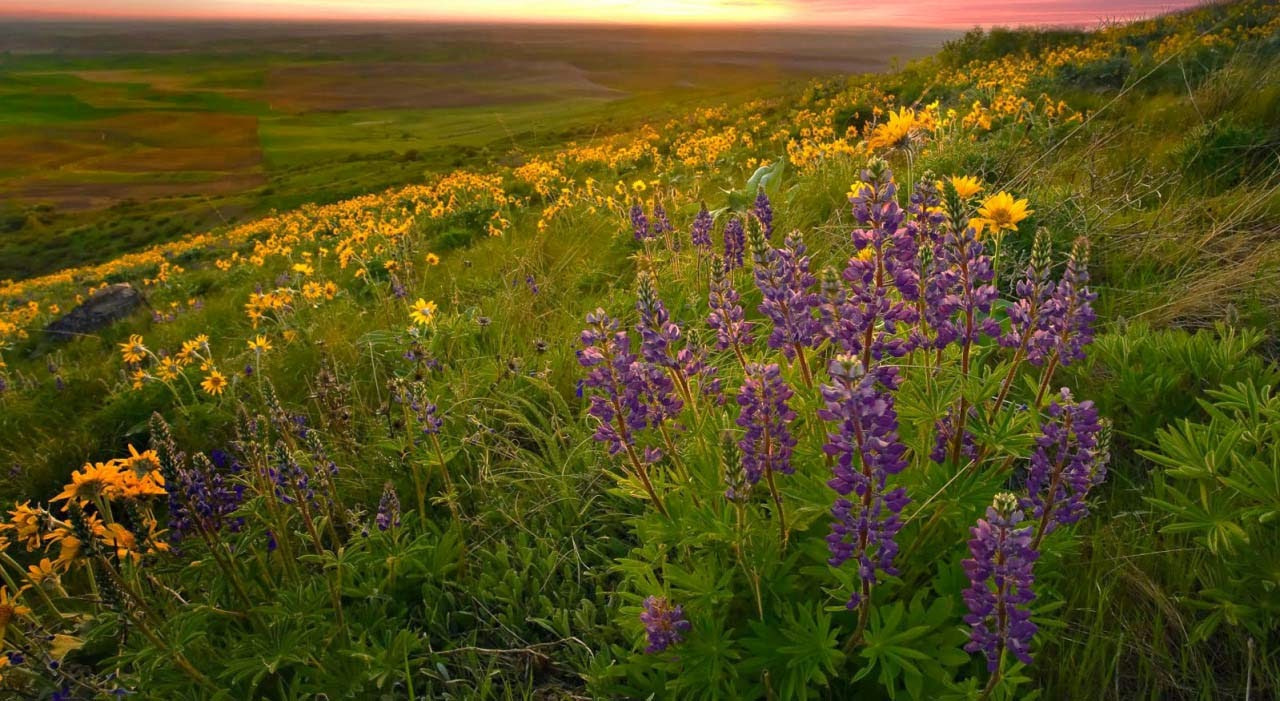 spring wallpapers widescreen free Download