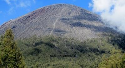 lokasi batas vegetasi kelik di gunung semeru