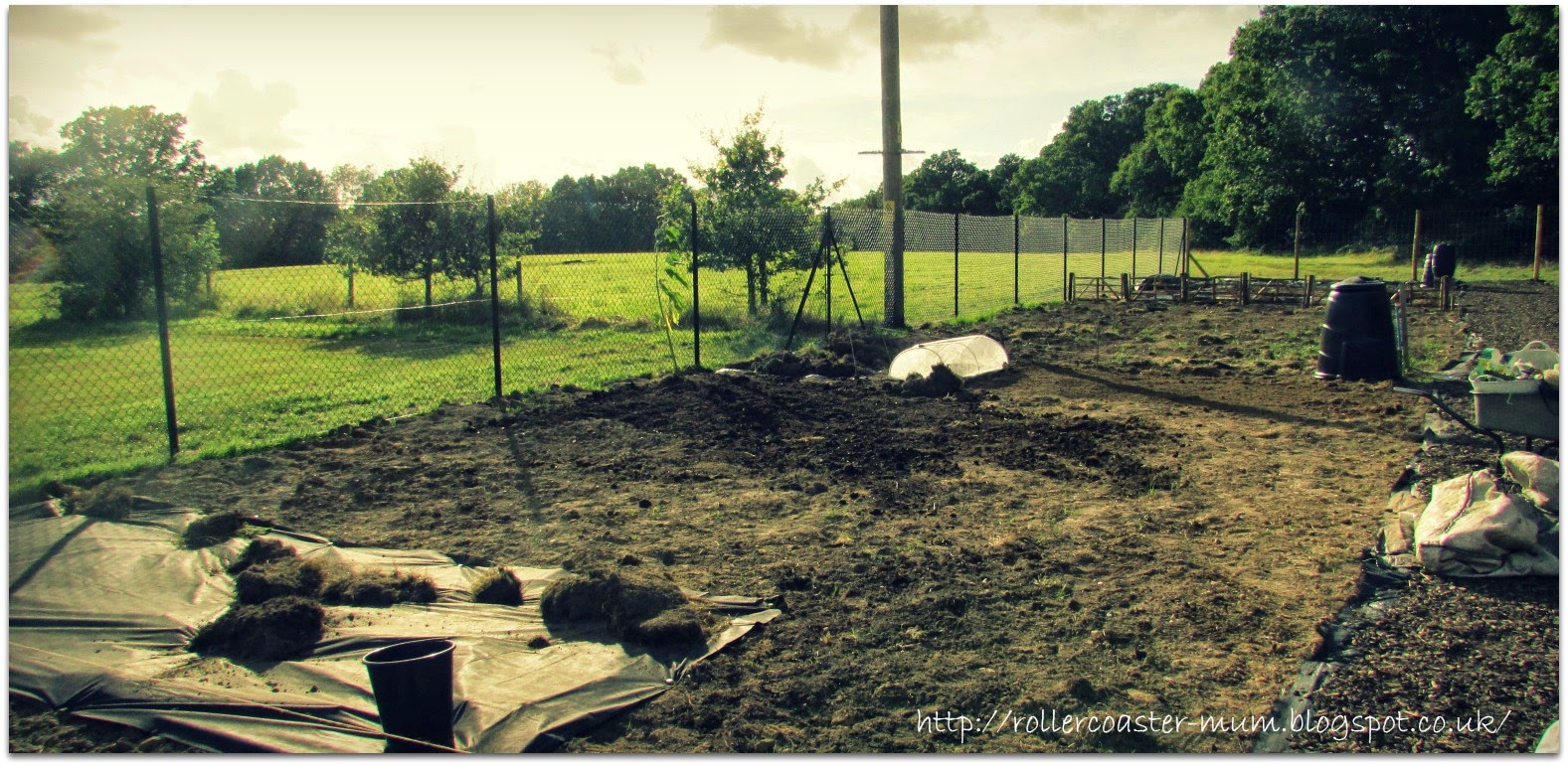 progress on the allotment