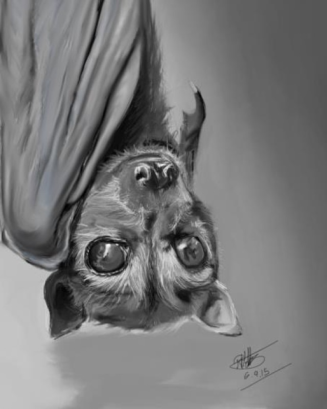 skyenimals an animal blog for kids the beauty of bats by rianne