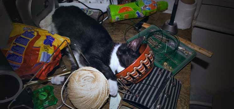 Kucing tertidur selepas menyepahkan meja