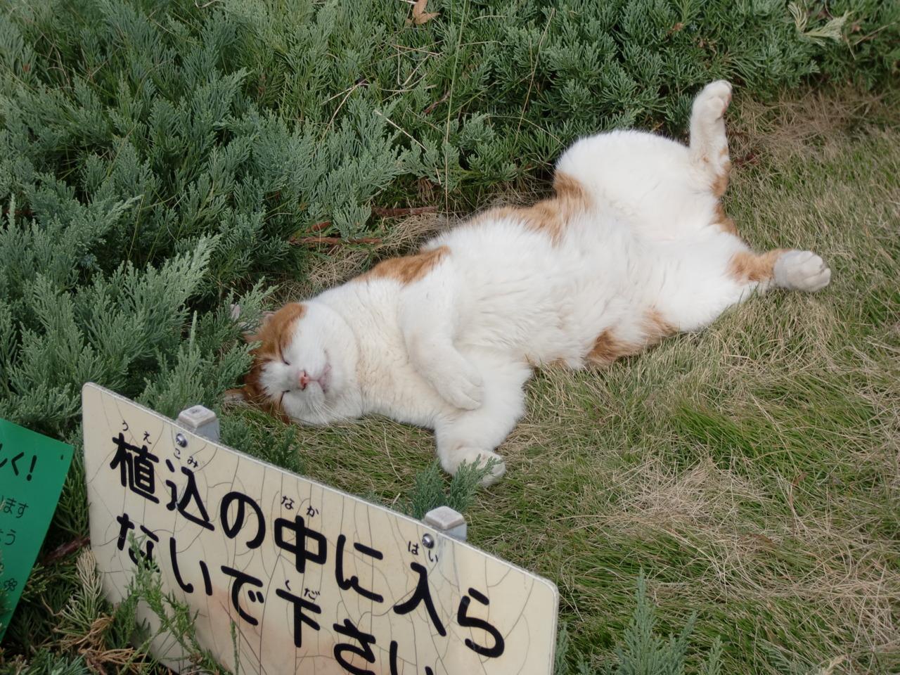 Бездомный кот лол