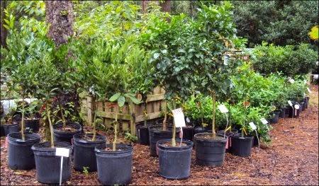 Bushes Trees & Shrubs