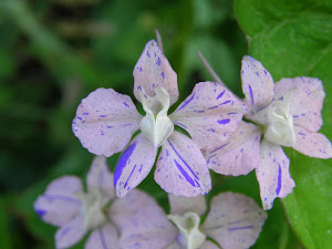 田舎暮らし不動産 Blog の花