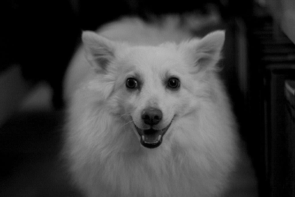 Migo Hund  oh.sweebe