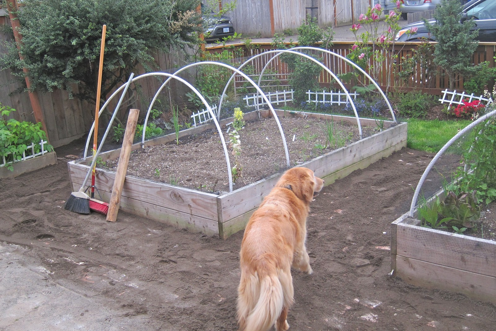 dog proof brick garden pathway solve the dog run problem part 1