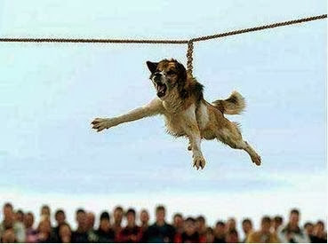 The Bizarre And Cruel Dog-Spinning Ritual [VIDEO]