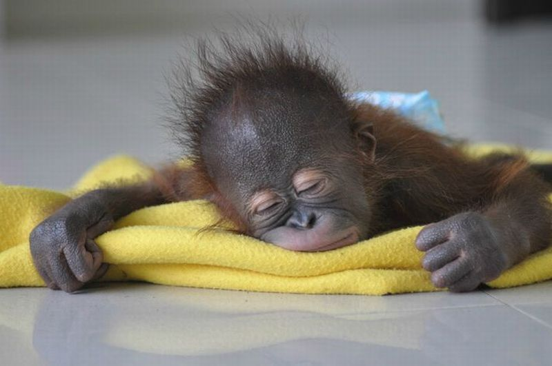 Photo Collection Cute Baby Animals Sleeping - 30 cutest pictures ever babies posing animals