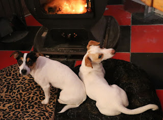 Settling in front of the fire