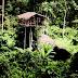 Suku Korowai, Masyarakat Tradisional yang Menjaga Adat Istiadat