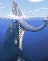Livyatan melvillei, gran depredador marino cuyo fosil fue hallado en Ocucaje