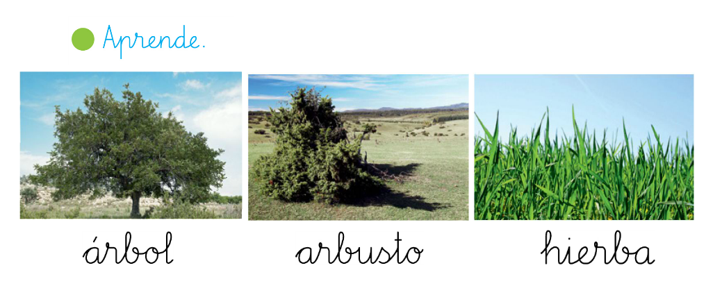 Imagenes de arboles arbustos y hierbas para colorear imagui - Nombres de arbustos ...