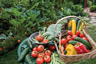 benefits of organic vegetable gardening