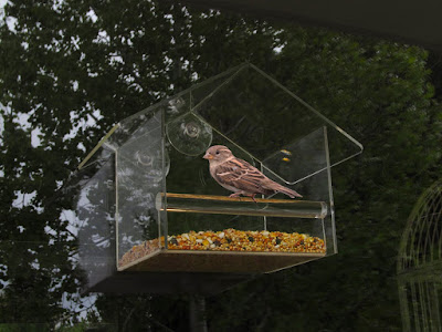 Yellow Beaks Clear Window Bird Feeder  #yellowbeaks