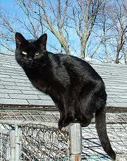 black cat on fence post