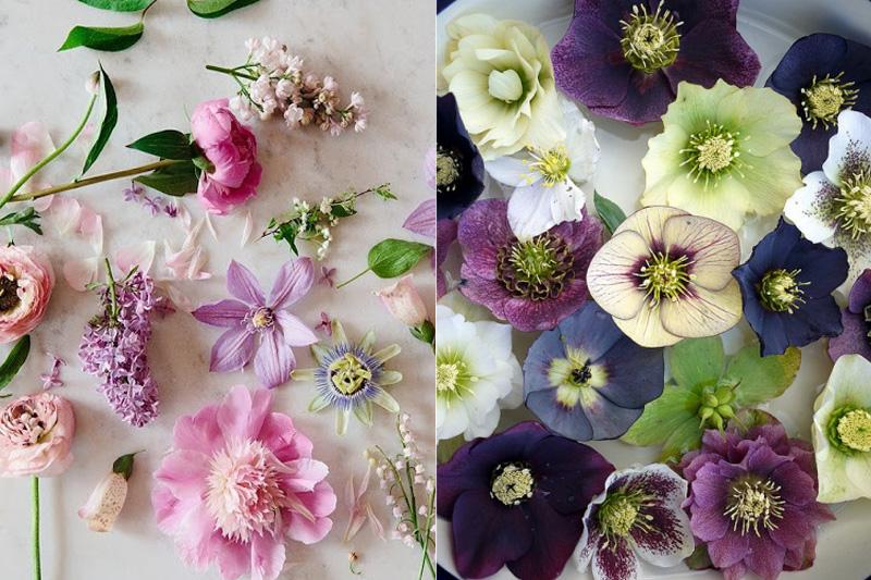 Flores Silvestres Vetores e Fotos Baixar gratis Freepik