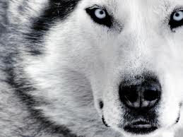 Beautiful animal wallpapers HD, desktop, latest, stylish, photography, wildlife, 2012, modern, images, pictures, wallpapers