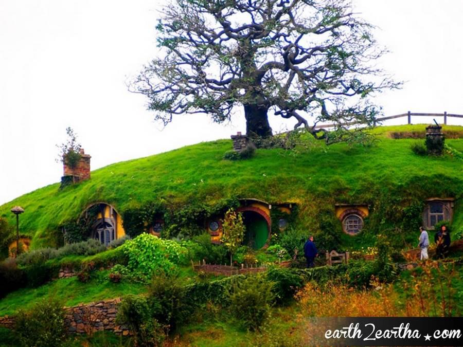 Bag End Oak Tree
