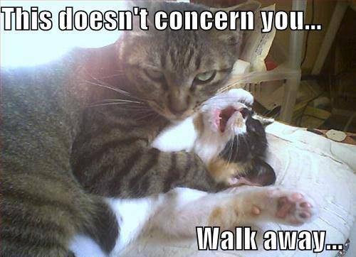 Funny/Cute Animal Pics Funny-animals_4241_1