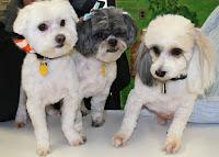 The PuppyKids