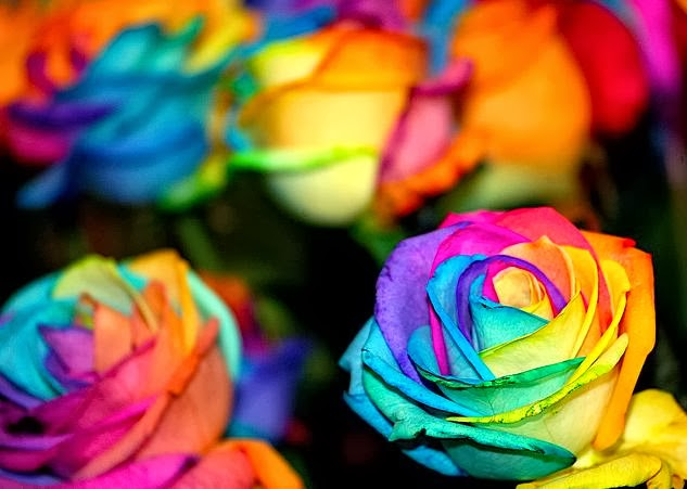 Flower homes rainbow roses for How to color roses rainbow