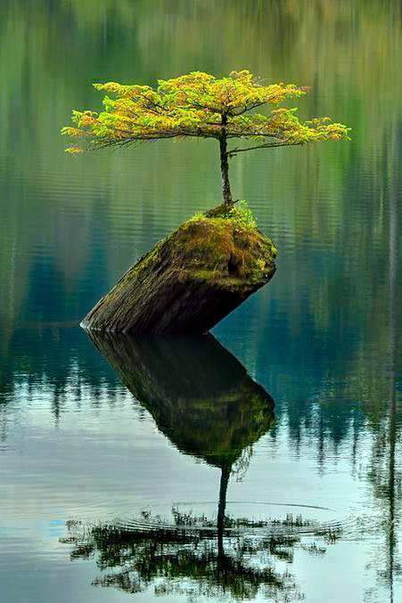 Tumbuhan yang tumbuh di pohon tengah sungai