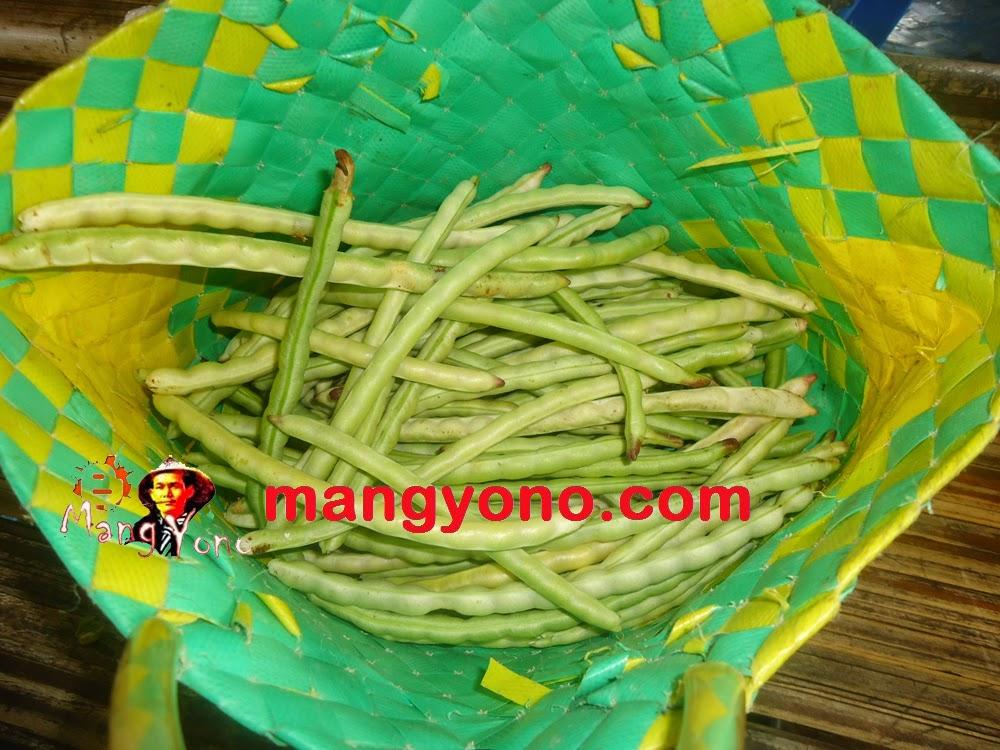 Kacang Tunggak (Vigna unguiculata, L)  dipetik hanya sedikit