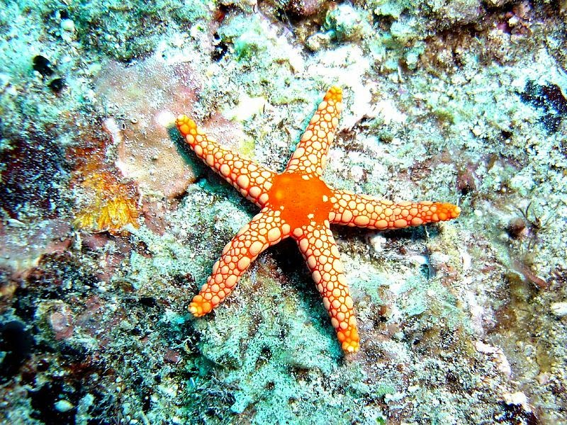 What does starfish mean sexually