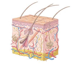 Carcinoma basocelular e espinocelular
