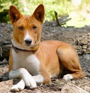 Best Small Dog No Shedding