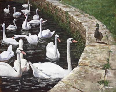 mallard_duck_swans_christchurch
