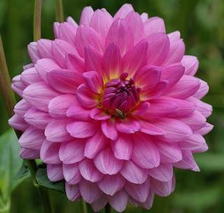 blog estudiantil diferentes clases de flores On clases de flores