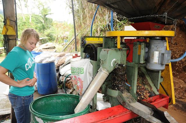 Volunteer at a coffee farm