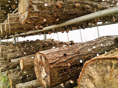 原木しいたけ