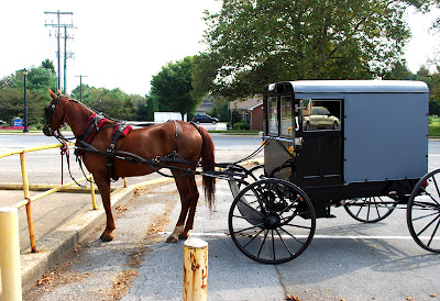 Amish buggy horse resting in a parking lot